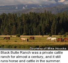 Black Butte Ranch - cattle