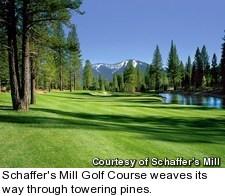 Schaffer's Mill Golf Course - pines